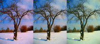 Three versions of a tree in the middle of a snow field show the results of relying on an inaccurate monitor profile.